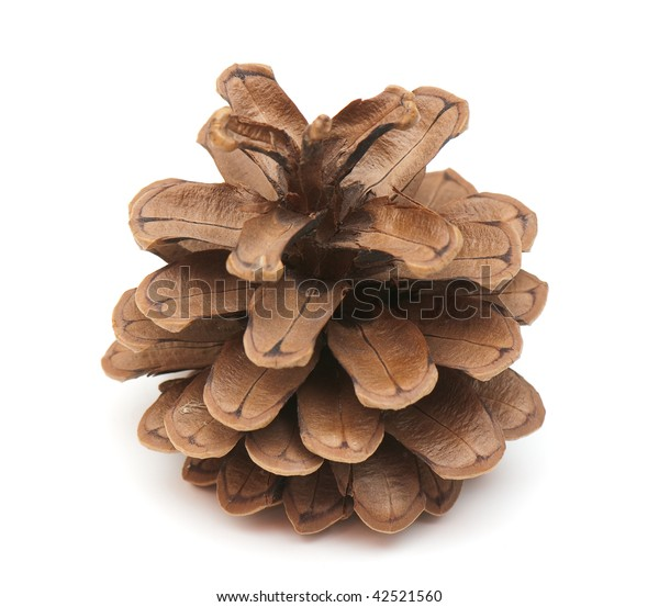 fir-cone on the white isolated background. simbol of the winter