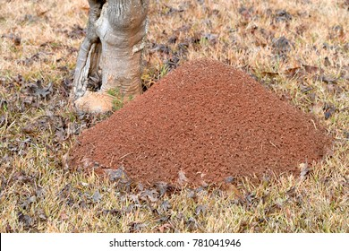 fire ant mound hill looking down huge large