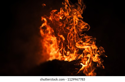Fire, bonfire, campfire. Flames of bonfire at night. Fire flames on a black background