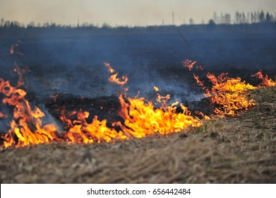 Fire, Burning old grass in the field
