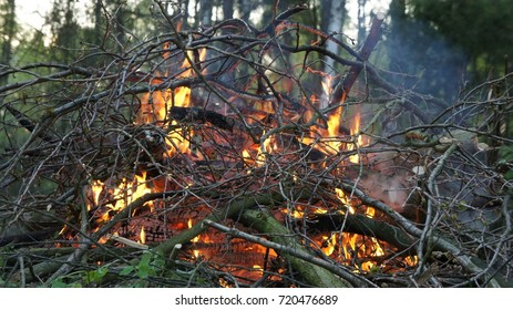 The fire and camping in forest