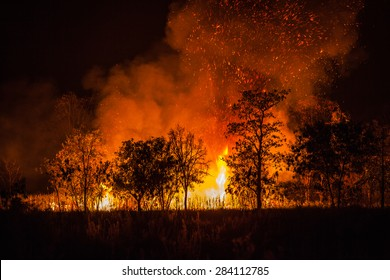 Fire caused by the destruction by humans.