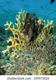 Fire coral and oysters