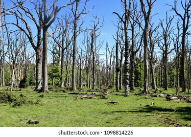 Fire damaged trees in a clearing in the New Forest in England