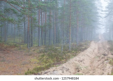 Fire ditch and pine forest in the misty day