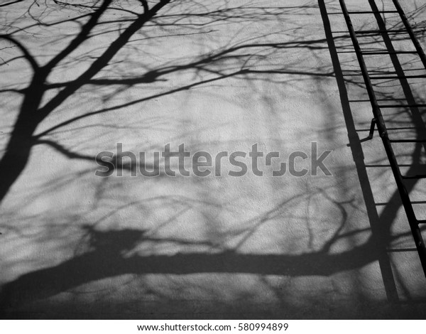 Fire escape, shadow tree on house. Black and white photo. One stair up, shadow stone, shadow house, up the ladder, without people