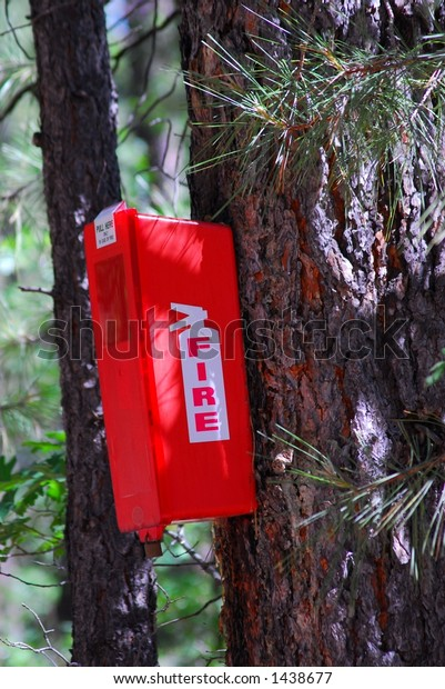 Fire extinguisher attached to forest tree