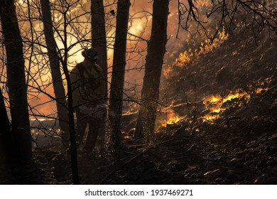 fire fighter falling trees in forest blaze washington state