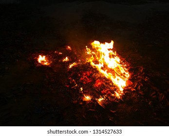 Fire flames on Dead leaves