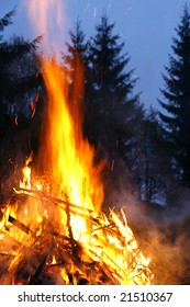 Fire is forest