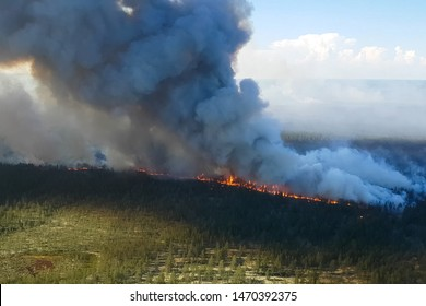 Fire in the forest, burning trees and grass. Natural fires in Russia.