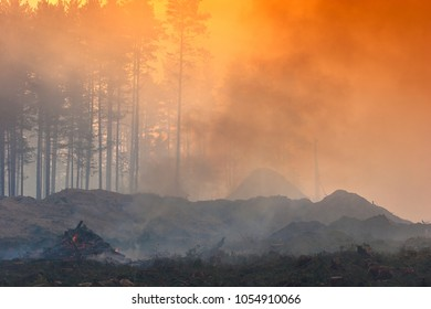 Fire in the forest, smoke, smog, burnt forest.