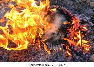 Fire - intensive oxidation process