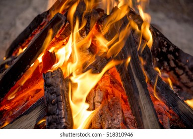 fire in nature . Bonfire in the forest