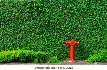 Fire safety pump on texture background of green leaves of ivy wall in the city on concrete floor. Deluge system of firefighting system. Plumbing fire protection. High pressure fire safety pump.
