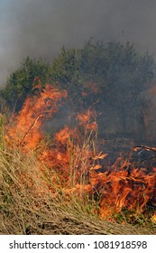 Fire in the steppe during the summer drought