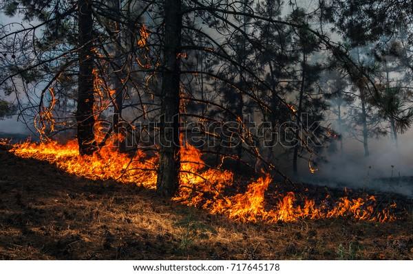 fuego. incendio forestal, quema de pinos en el humo y las llamas.