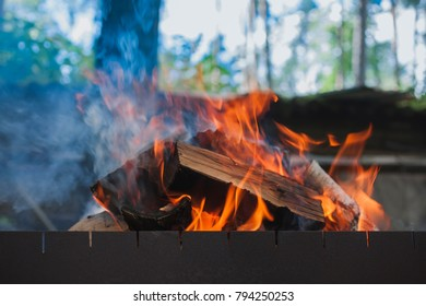 the fire and wood in the brazier on the background of the forest