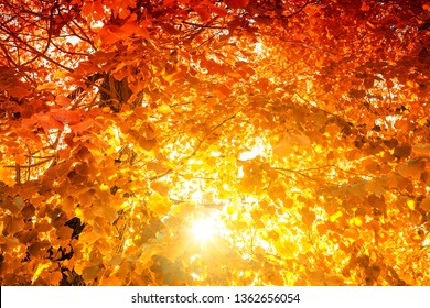 Fire-colored canopy with colorful Foliage
