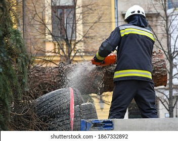 Firefighter cuts a pinetree with a chainsaw