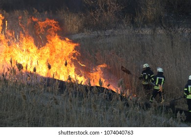 Firefighters battle a wildfire in spring. Smoke field and fireman after wildfire. Fire. wildfire burning pine forest in the smoke and flames. Forest fire burning.