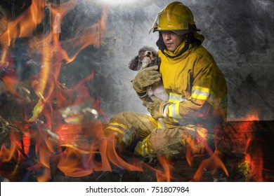 Firefighters help the dog in the burning house.