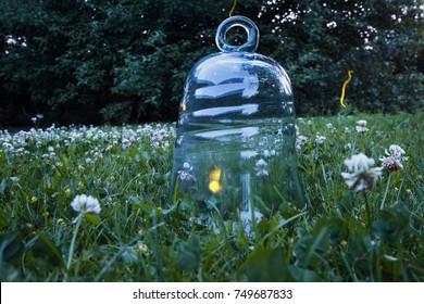 Fireflies in a bell jar
