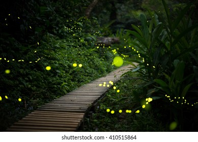 fireflies in the bush at night in taiwan