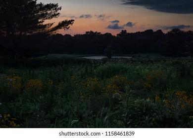 Fireflies in Evening