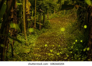 Fireflies Flash On The Trail Of A Garden In Spring After Dark At Hsinchu, Taiwan