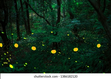 Fireflies at the forest in Japan