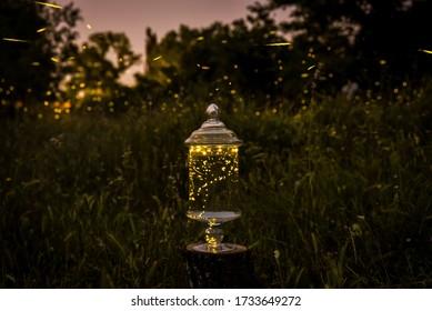 Fireflies inside a glass jar on outdoor