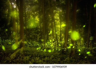 Fireflies in the summer at the fairy forest