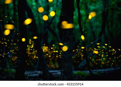 Fireflies in the summer at forest near Burgas city, Bulgaria