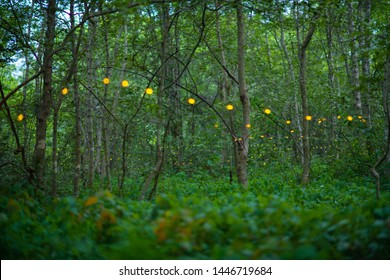 Fireflies in the summer at forest near city Thailand.