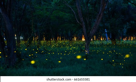 Fireflies in the summer at forest,thailand