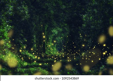 Fireflies in the wild forest. famous romantic place called Tunnel of Love, Klevan, Ukraine.  natural summer (spring) background (collage)