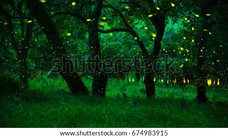 Firefly flying in the forest. Fireflies in the bush at night at Prachinburi province, Thailand. Long exposure photo. The forest in fairy tale. Magic fairy forest