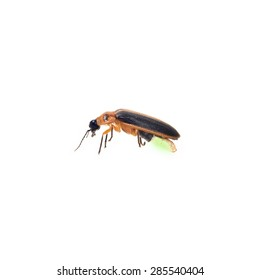 Firefly isolate on white background (BUG)