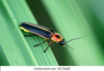 Firefly macro.
