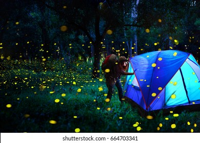 Firefly, Women shoulder backpack Camping in the middle of the forest, there are many glittering fireflies. Relaxing camping, romantic atmosphere. Activity in holiday and hiking concept.