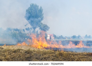 Fireman at Work close to a Wheat field in flames Blackened and completely burnt
