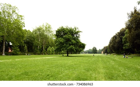 Firenze, Le Cascine park. A nice tree stands alone in a wide green  meadow