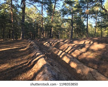 Fireproof trenches divide the sand dunes and prevent burning of the pines.