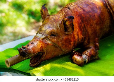 Fire-roasted suckling pig served on banana leaves. Filipino food Lechon.