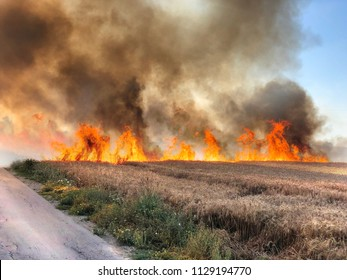 """Fires in Israel that caused from burning kites and balloons that sent from the Gaza strip to Israel by the terror organisation """"Hamas"""". Thousands of acres of national parks with lots of animals burnt."""