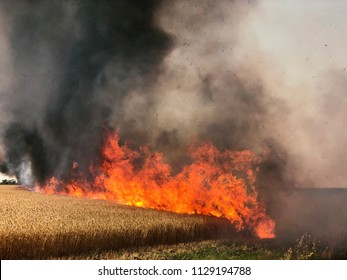 "Fires in Israel that caused from burning kites and balloons that sent from the Gaza strip to Israel by the terror organisation ""Hamas"". Thousands of acres of national parks with lots of animals burnt."