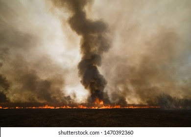 Fires in the Russian forest, Transbaikal forest in fire, burning of forests