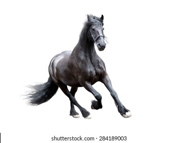 firesian horse running isolated on white