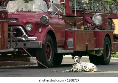 firetruck and dog
